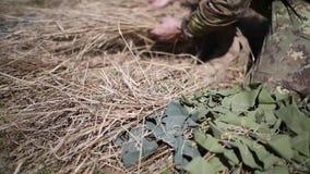 Un soldado en un explorador de la guerra pone la hierba seca en red del camuflaje para crear el camuflaje para la cautela metrajes