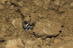 Un soldado miniatura está tirando Fotos de archivo