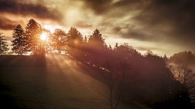 un soleil brille par un arbre Image libre de droits
