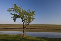 Un solo árbol Foto de archivo