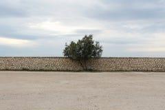 Un solo árbol contra una pared de piedra, cielo nublado Imagen de archivo