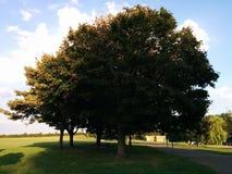 Un solo árbol derecho Imagen de archivo