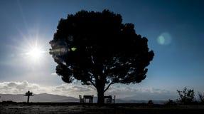 Un solo árbol en Creta Imágenes de archivo libres de regalías