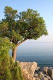 Un solo árbol en la orilla de mar Imagen de archivo libre de regalías