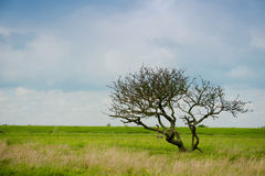 Un solo árbol en un campo ancho Imagenes de archivo