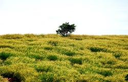 Un solo en un campo amarillo del cementerio Foto de archivo