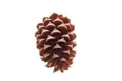Un solo pinecone marrón para la decoración Aislado en un fondo blanco Foto de archivo libre de regalías