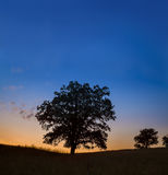 Un solo roble grande en la puesta del sol o la salida del sol Fotos de archivo libres de regalías