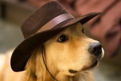 Un sombrero de vaquero del desgaste del perro Imagen de archivo libre de regalías