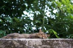 Un sommeil de chat sur le vieux mur Photo libre de droits