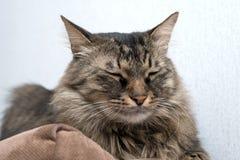 Un sommeil mignon de chat Photographie stock libre de droits