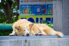 Un sonno del cane Immagini Stock Libere da Diritti