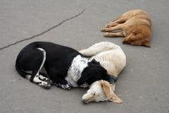 Un sonno di tre cani randagi immagine stock libera da diritti