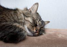 Un sonno sveglio del gatto Fotografie Stock Libere da Diritti