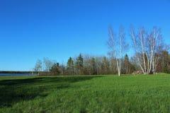 Un soporte de los árboles de abedul desnudos alrededor de una pila de la roca en el medio de un prado por la bahía en Nova Scotia Fotografía de archivo