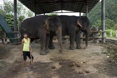 Un soporte del muchacho al lado de dos elefantes en un pueblo de Tailandia Foto de archivo