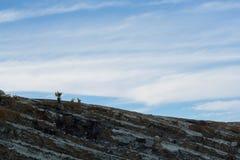 Un soufre de transport de travailleur avec le panier en bambou du cratère d'Ijen Image stock
