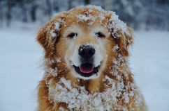 Un sourire sur un chien drôle est amour en hiver Image stock