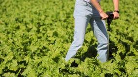 Un spécialiste en usine, l'agriculteur effectue un essai de la densité du sol du champ de la jeune betterave banque de vidéos