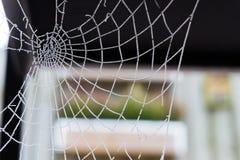 Un spiderweb en invierno con un fondo del colorfull imagen de archivo libre de regalías