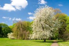 Un stationnement au printemps photographie stock libre de droits