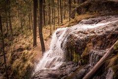 Un sueño en los campos del bosque de Mexico Royalty Free Stock Photography