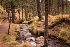Un sueño en los campos del bosque de Mexico Stock Photo