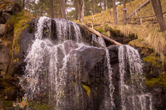 Un sueño en los campos del bosque de Mexico Royalty Free Stock Image