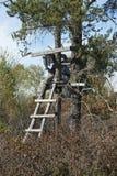 Un support de cerfs communs dans une forêt du Minnesota Photos stock
