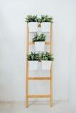 Un supporto decorativo della pianta della scala per coltivare insieme parecchie piante verticalmente Immagine Stock