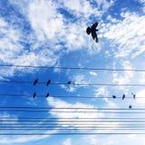 un supporto dell'uccello su cavo elettrico con cielo blu Immagini Stock
