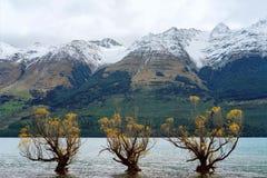 Un supporto di tre alberi avanti contro un fondo delle alpi innevate Fotografie Stock