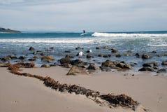 Un surfista guida un'onda nell'oceano Fotografia Stock