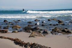 Un surfista guida un'onda nell'oceano fotografia stock libera da diritti