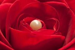Un symphonie en rouge Photo stock