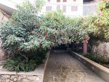 Un túnel, un arco de un arbusto verde hermoso, un árbol con las hojas del verde y flores rojas con pétalos y un camino de piedra fotos de archivo