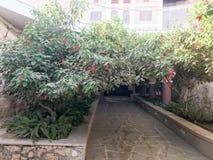 Un túnel, un arco de un arbusto verde hermoso, un árbol con las hojas del verde y flores rojas con pétalos y un camino de piedra  foto de archivo