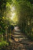Un túnel de ramas de bambú verdes con la luz suave en el extremo Pase en el parque con pasos de las losas de piedra El ` s del so Imágenes de archivo libres de regalías