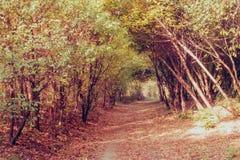 Un túnel del misterio bajo ramas amarillas y anaranjadas fotografía de archivo