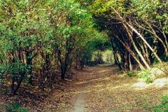 Un túnel del misterio bajo ramas verdes foto de archivo libre de regalías