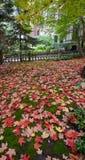 Un tapis d'automne Images stock