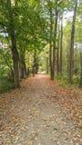 Un tapis des feuilles image libre de droits