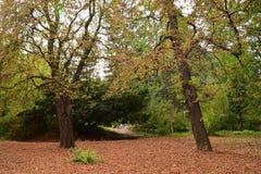 Un tapis des feuilles Photographie stock libre de droits