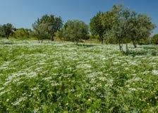 Un tapis des fleurs de ressort Photo libre de droits