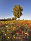 Un tapis magnifique de fleur dans le désert image stock