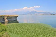 Un tappeto delle ninfee sulle banche del lago Shkodra, Albania Immagini Stock