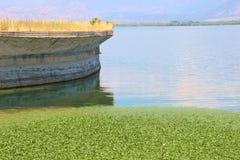 Un tappeto delle ninfee sulle banche del lago Shkodra, Albania Fotografie Stock Libere da Diritti