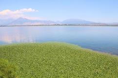 Un tappeto di acqua sulle banche del lago Shkodra, Albania Immagine Stock