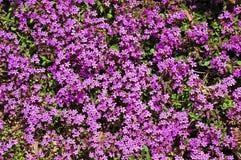 Un tappeto piacevole dei flovers selvaggi fotografie stock