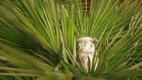 Un tarro de cristal con los dólares de los billetes contra un fondo de la palmera Acumule los ahorros en licencia almacen de metraje de vídeo